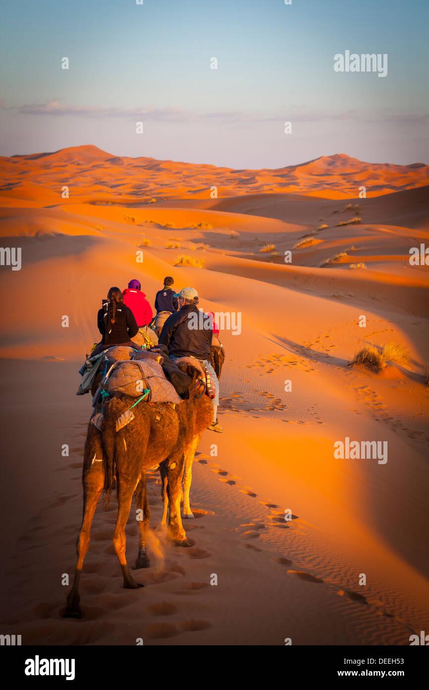 Tourists on camel safari, Sahara Desert, Merzouga, Morocco, North Africa, Africa - Stock Image