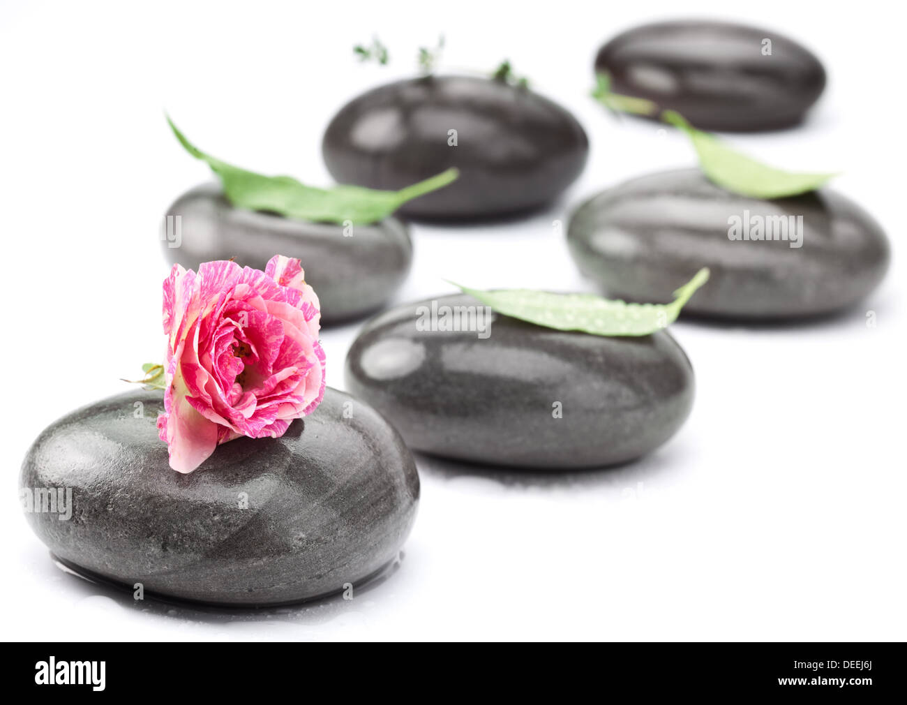 Set of spa massage stones with rose on a white background. - Stock Image