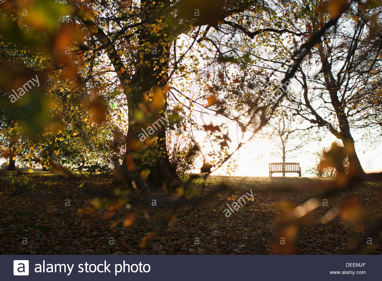 Park bench and autumn trees - Stock Image