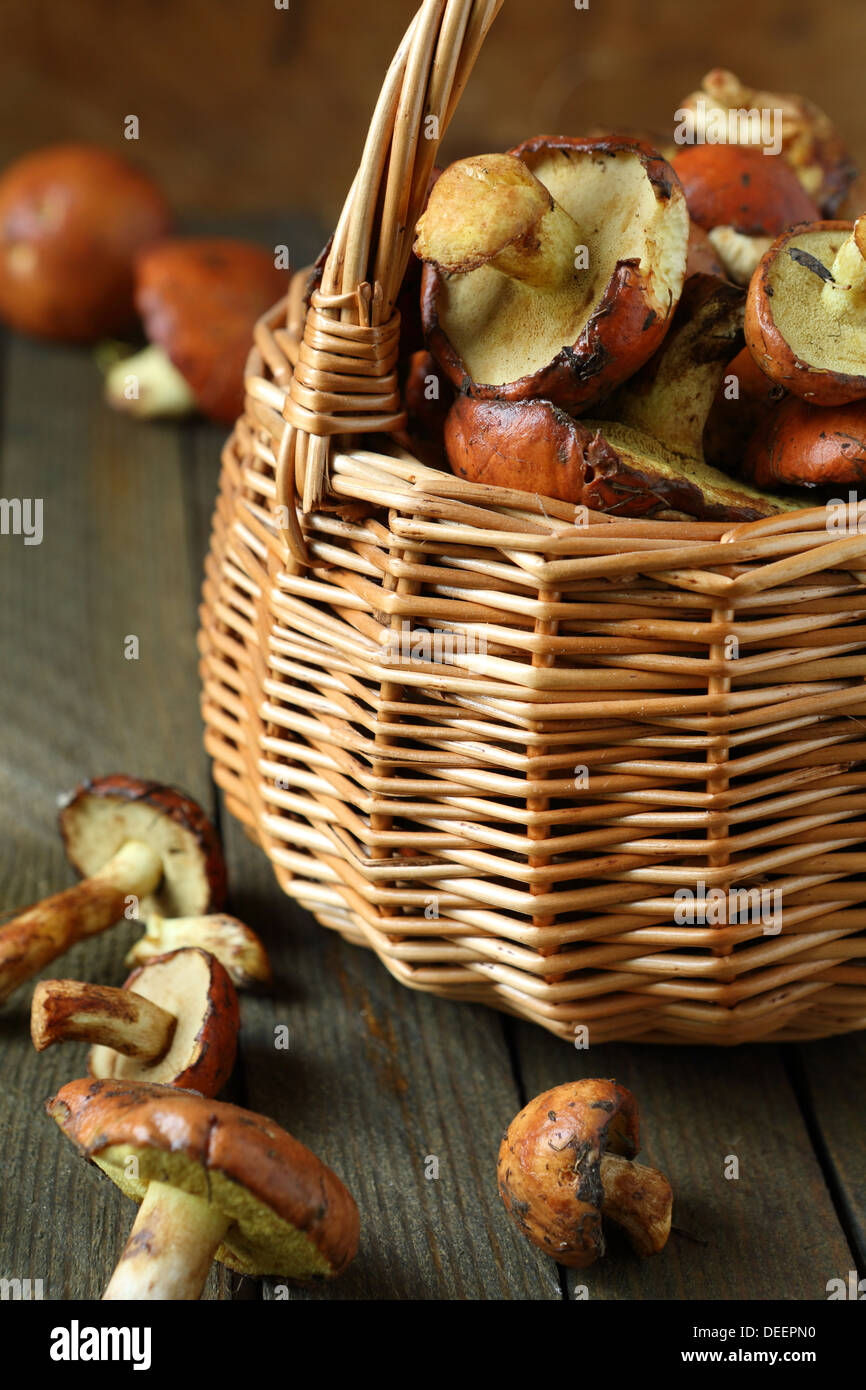 fresh wild mushrooms in a basket, food close up - Stock Image