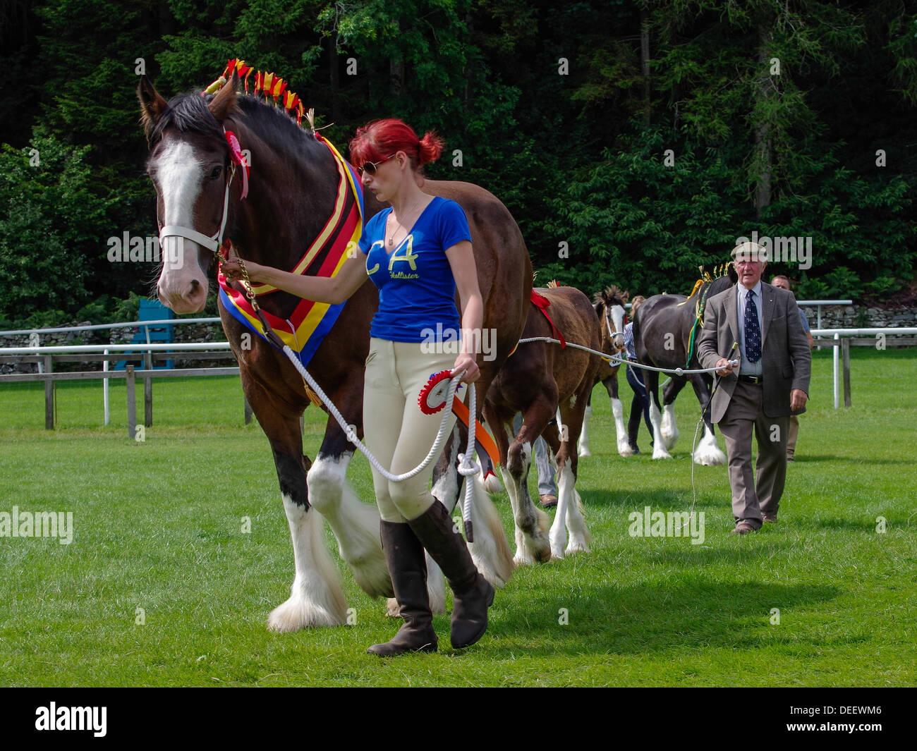 Heavy horses at the Cartmel Show 2013 - Stock Image