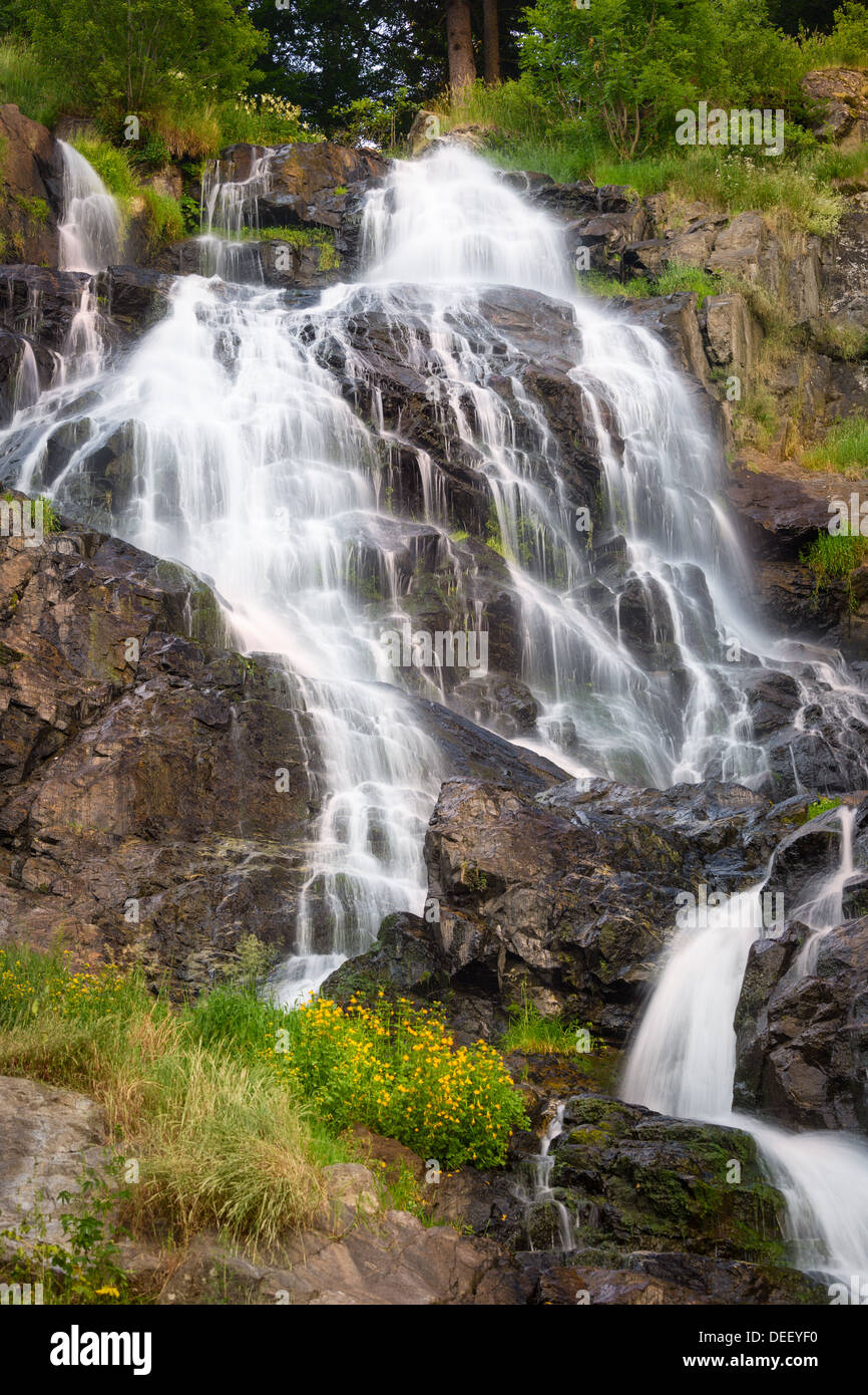 Todtnauer Waterfalls with yellow flowers, Black Forest, Germany Stock Photo