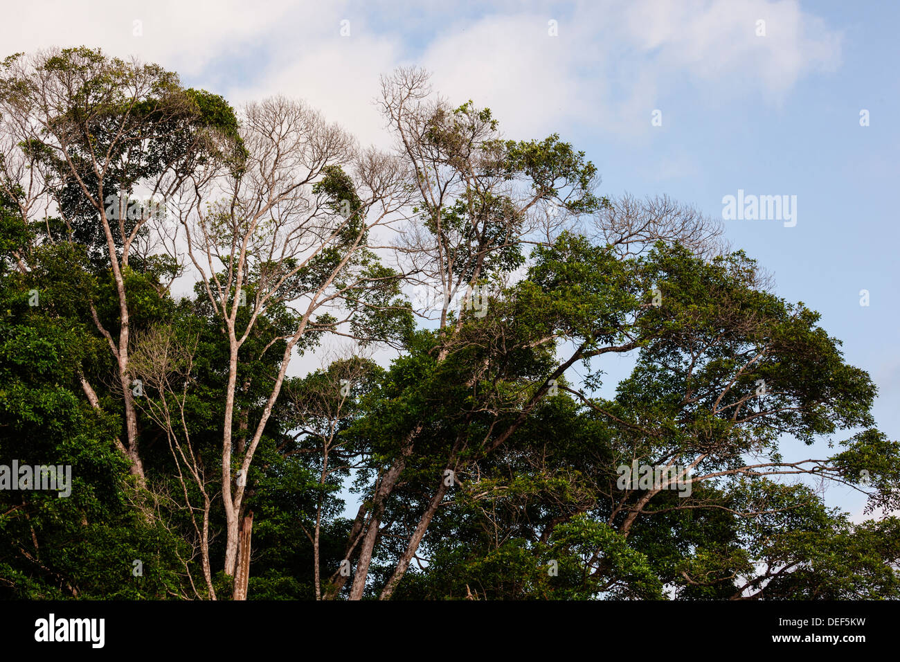 Africa, Cameroon, Kribi. View of trees. - Stock Image