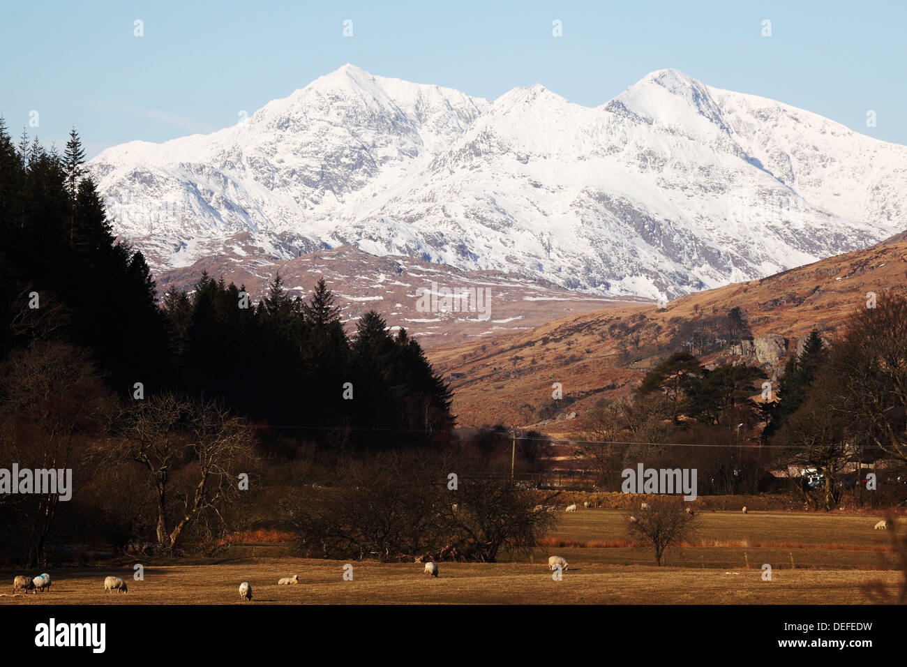 Mount Snowdon capped with snow as Welsh sheep graze on a sunny spring day  in Snowdonia National Park, Wales, United Kingdom Stock Photo