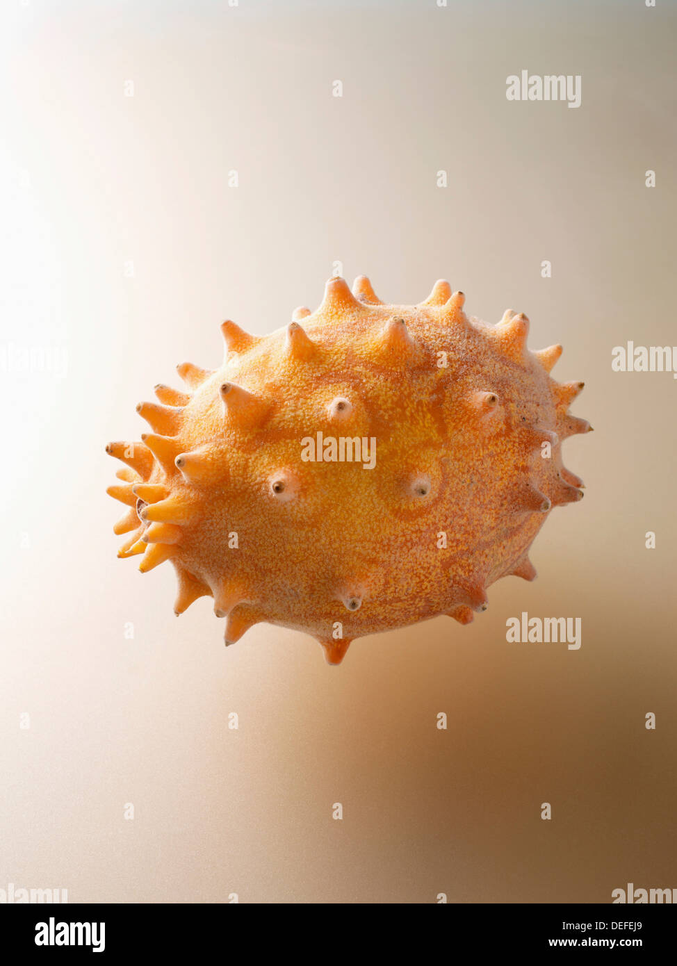 Horned melon, tropical fruit, frosted - Stock Image