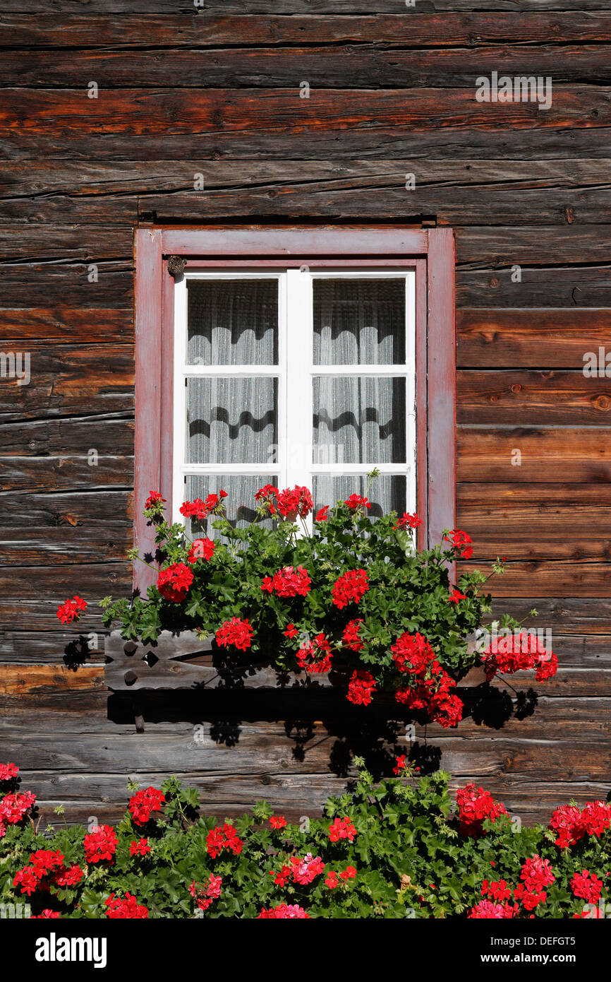 Window Box Full Of Geraniums Stock Photos & Window Box Full Of ... on old wood houses, old truck houses, old dog houses, old white houses, old pack houses, old boat houses, old kit houses, old tree houses, old ice houses, old shabby houses, old brown houses, old london houses, old time houses, old block houses, old beach houses, old flower houses, old light houses, old stick houses, old frame houses, old fish houses,
