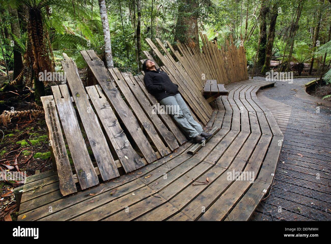 Viewing platform for giant Swamp Gum Eucalyptus regnans, one of the tallest tree species in the world. Styx Valley of the - Stock Image