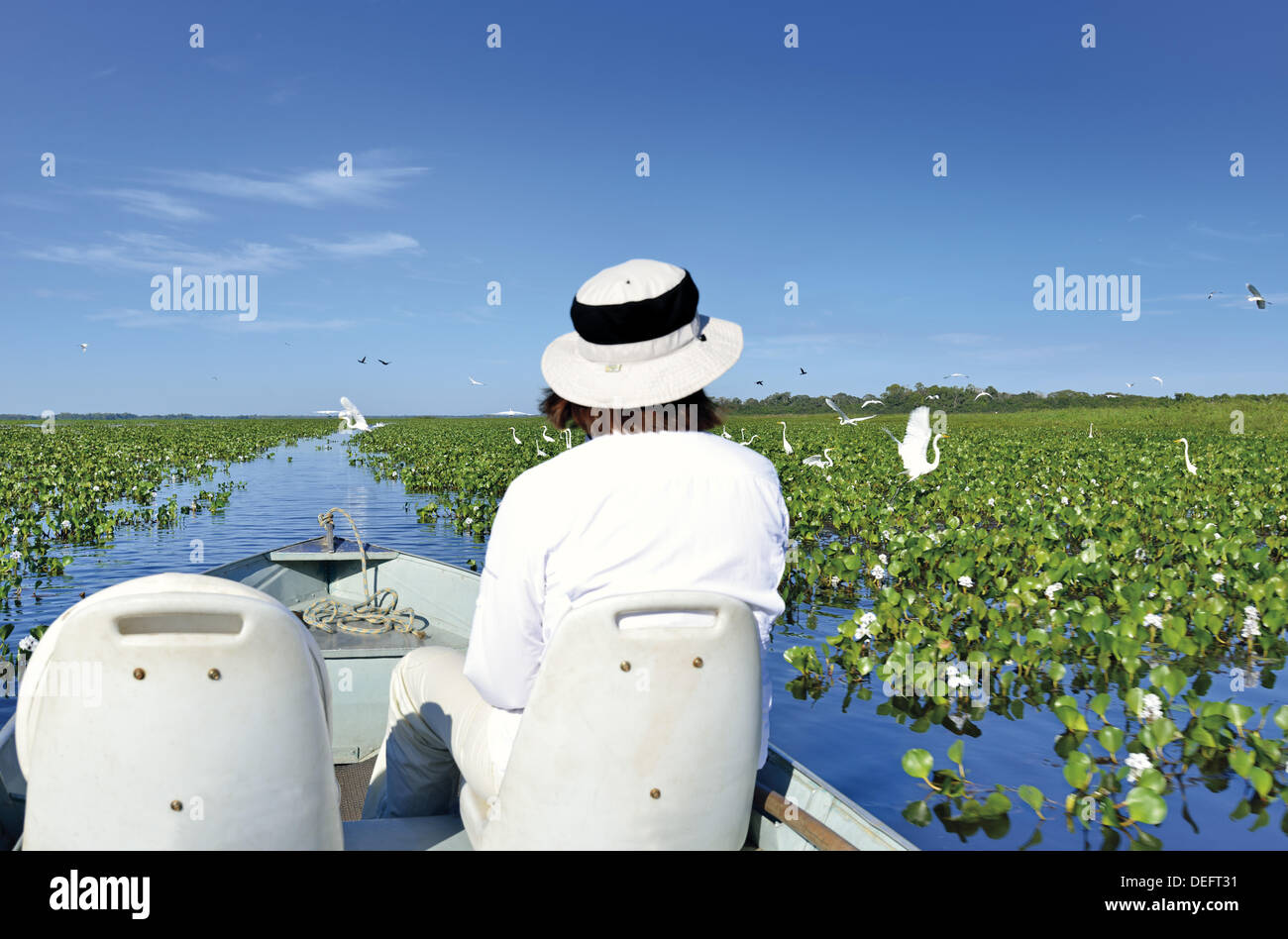 Brazil, Mato Grosso, Pantanal, Pousada Piuval, boat tour, boat trip, travel, tourism, nature, woman, tourist with hat,  white cloth, UV protection, sun, sunny, natural, water, waterlilies, birds, birdwatching, ornithology, Brazil, 2014, destinies in Brazil - Stock Image