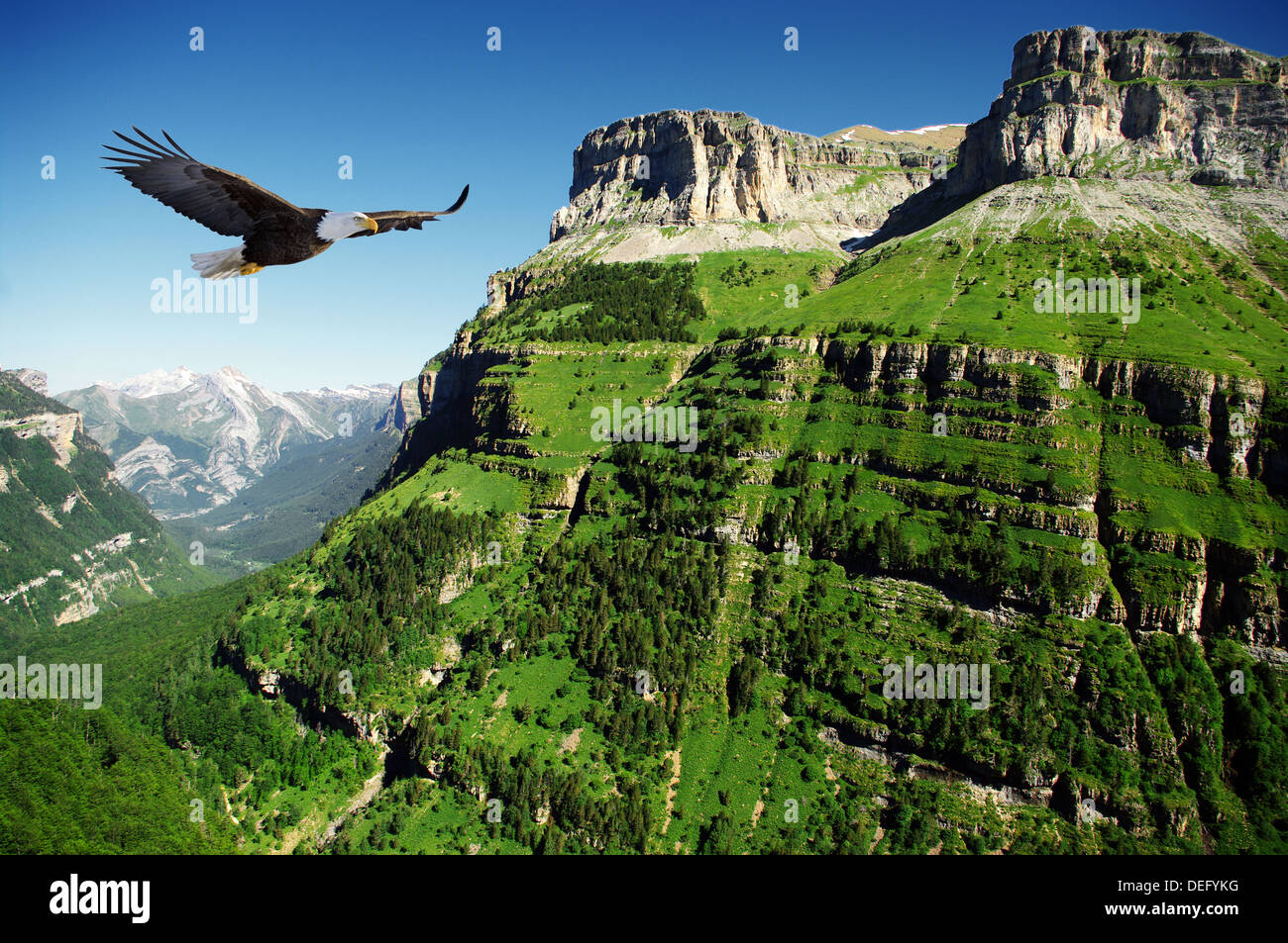 eagle in Ordessa Valley panoramic - Stock Image