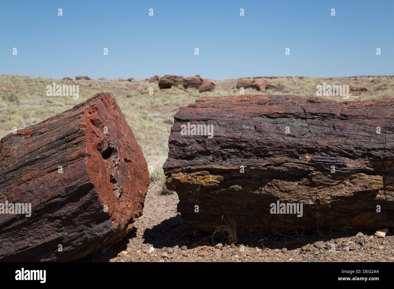 Petrified logs from the late Triassic period, Long Logs Trail, Petrified Forest National Park, Arizona, USA - Stock Image