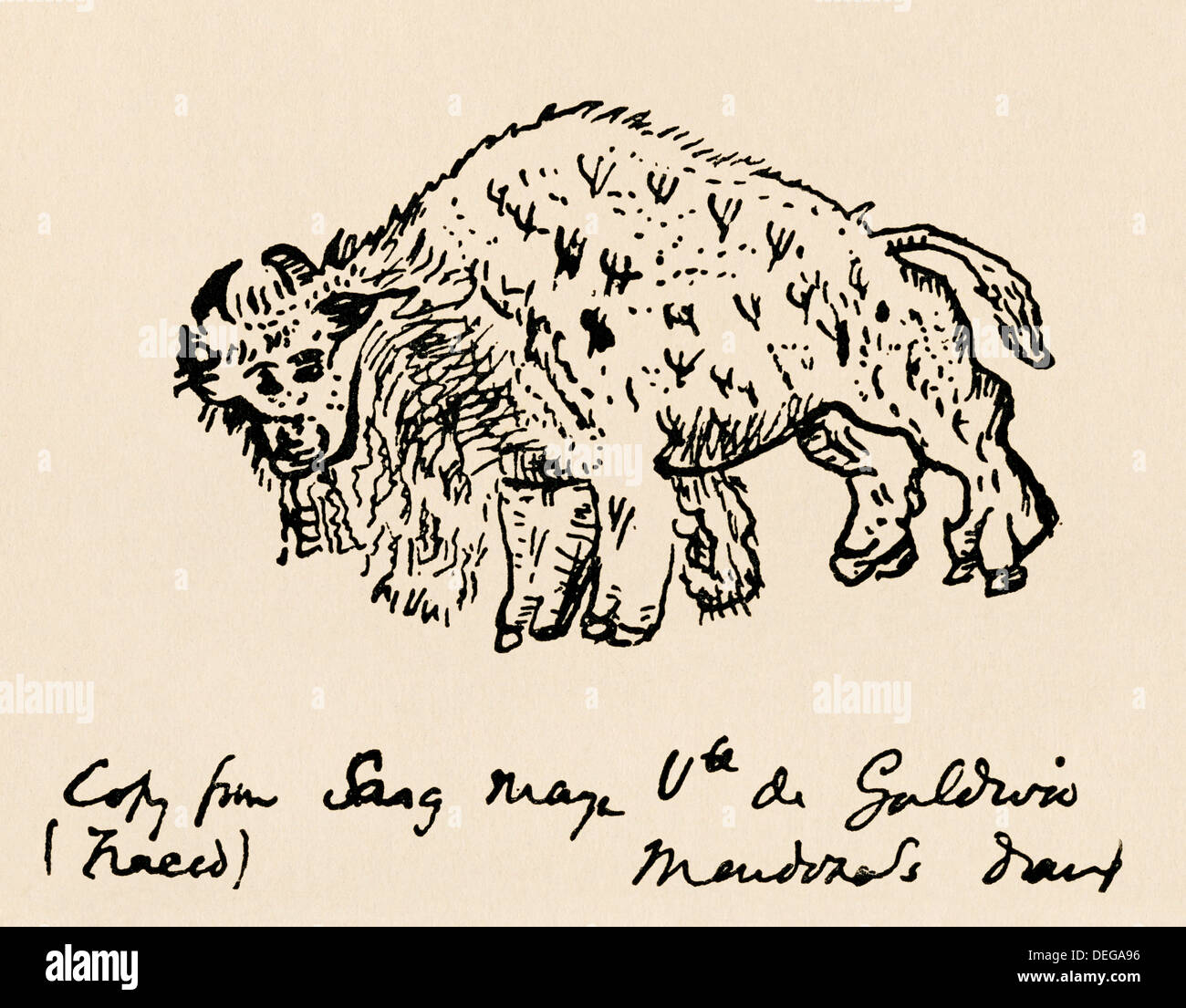 Sketch of an American bison made about 1599 during Onate's expedition. Woodcut - Stock Image
