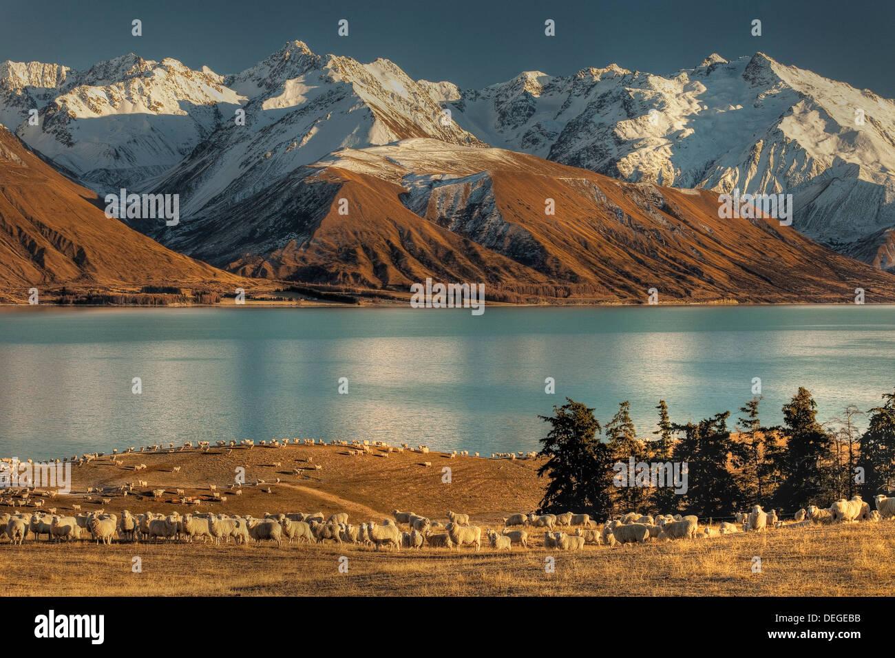 High country sheep station near Mt Cook, Lake Pukaki, Ben Ohau Range behind, Canterbury. - Stock Image