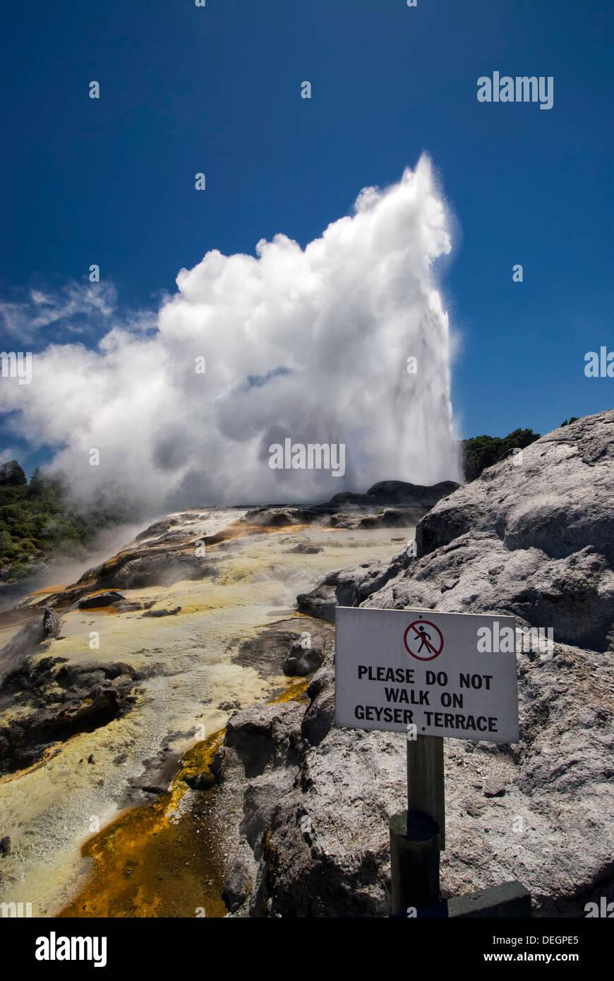 Whakarewarewa geyser in Rotorua, North Island, New Zealand - Stock Image