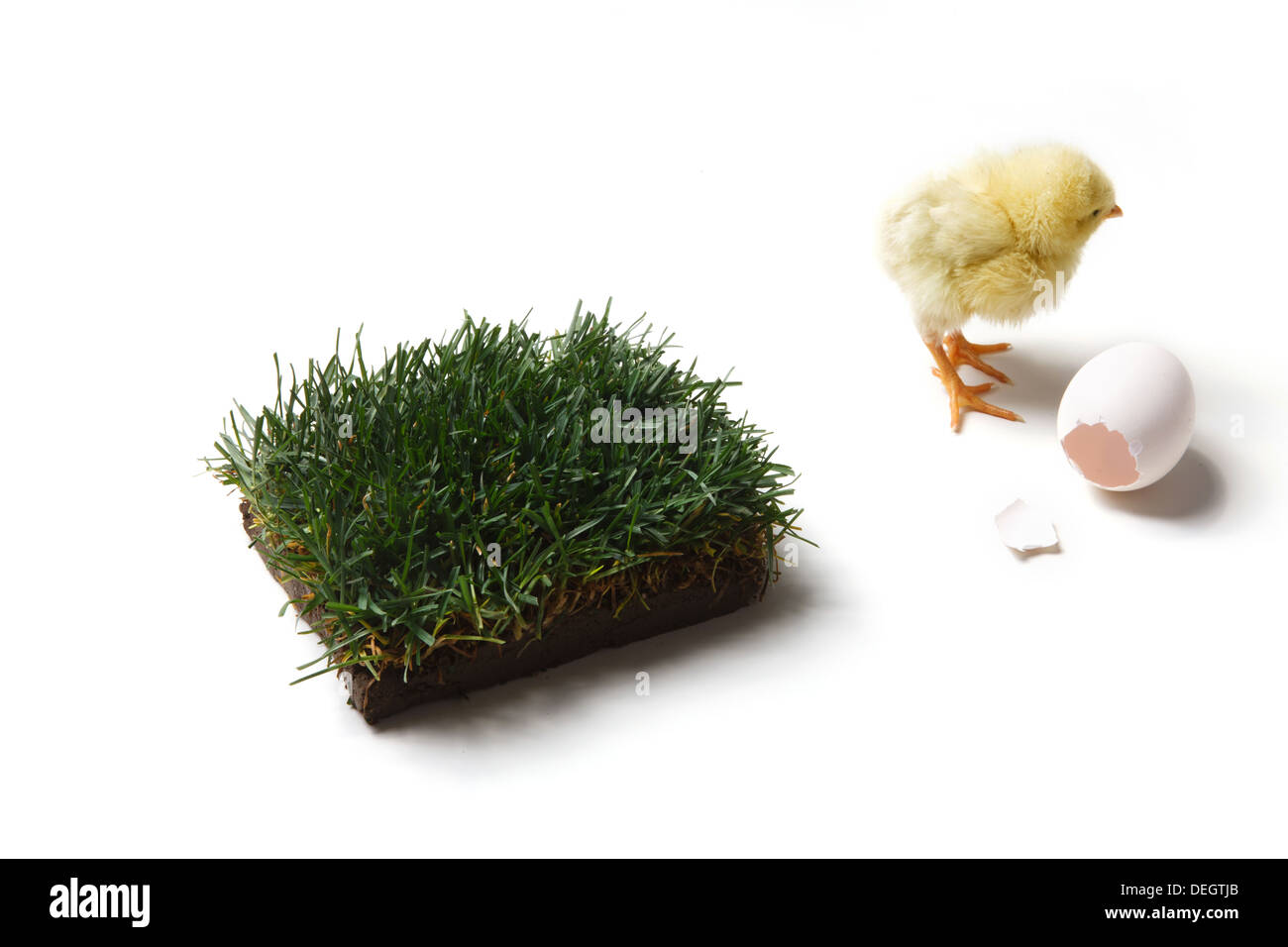 Ckick,small lawn and broken eggshell - Stock Image
