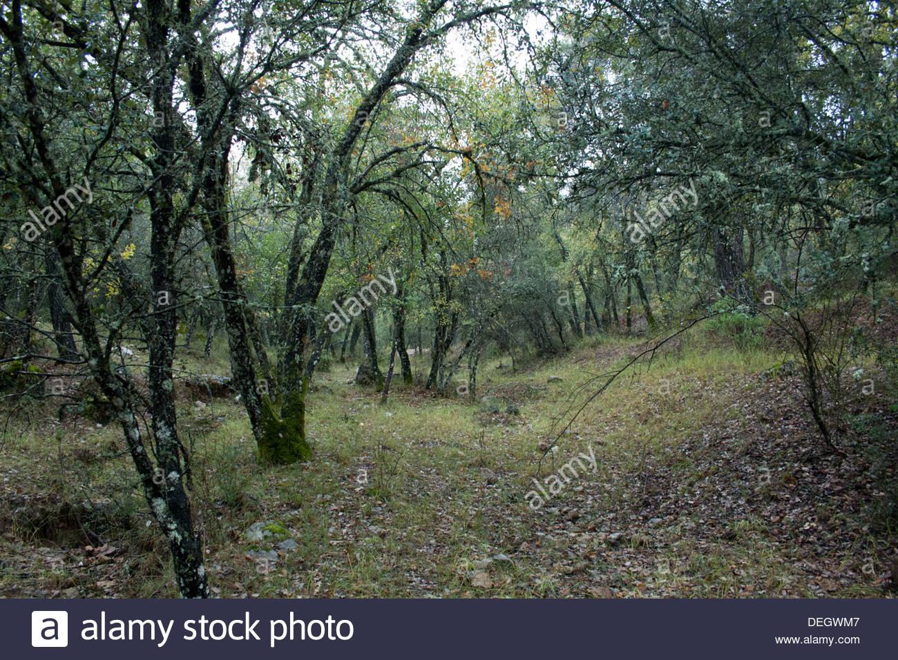 Forest Landscape at Sierra de Cazorla, Segura y Las Villas National Park, in Jaen, Andalucia, Spain. Stock Photo