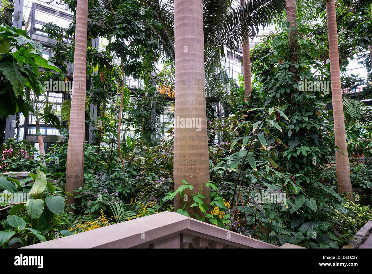 greenhouse interior us botanic garden washington dc usa stock image - Botanical Garden Washington Dc