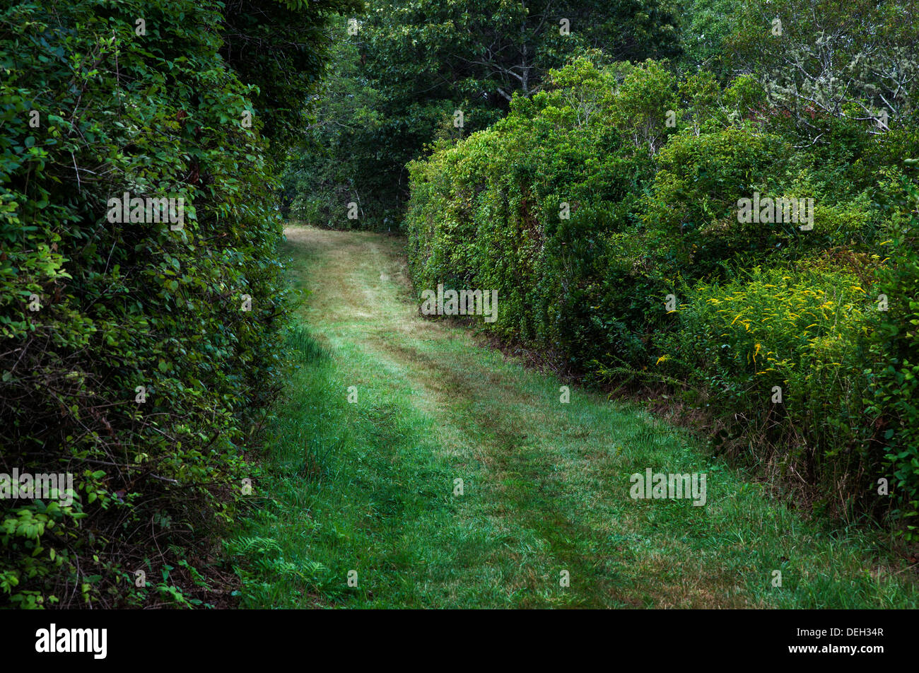 Unpaved grass country road. - Stock Image