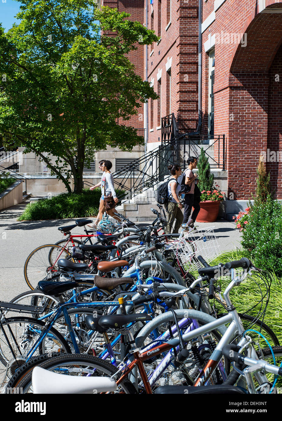 Attractive campus and student life in the commons, Brown university, Providence, Massachusetts, USA - Stock Image