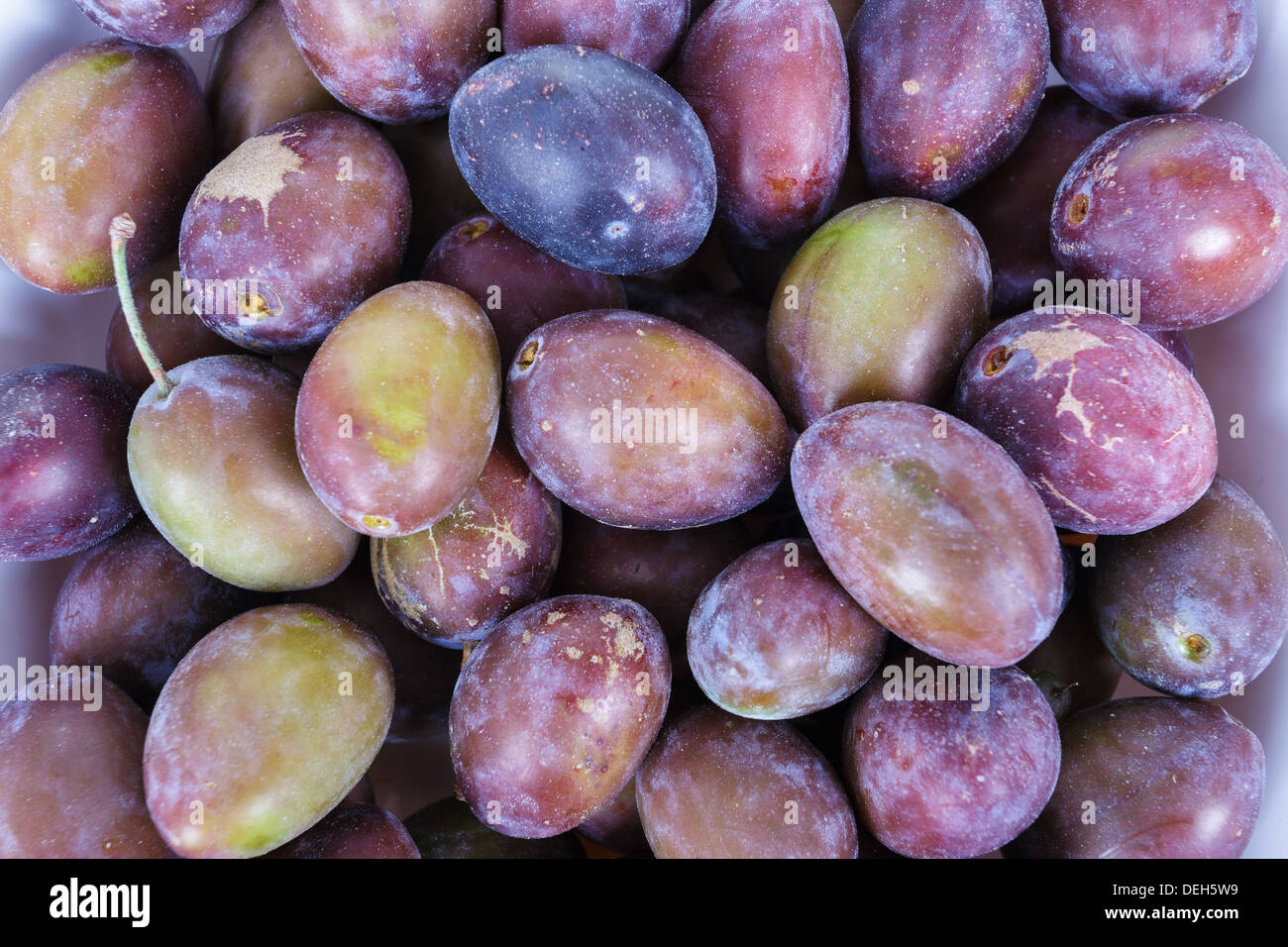Acid purple and green Plums (Blackthorns) Background, Texture, detail - Stock Image