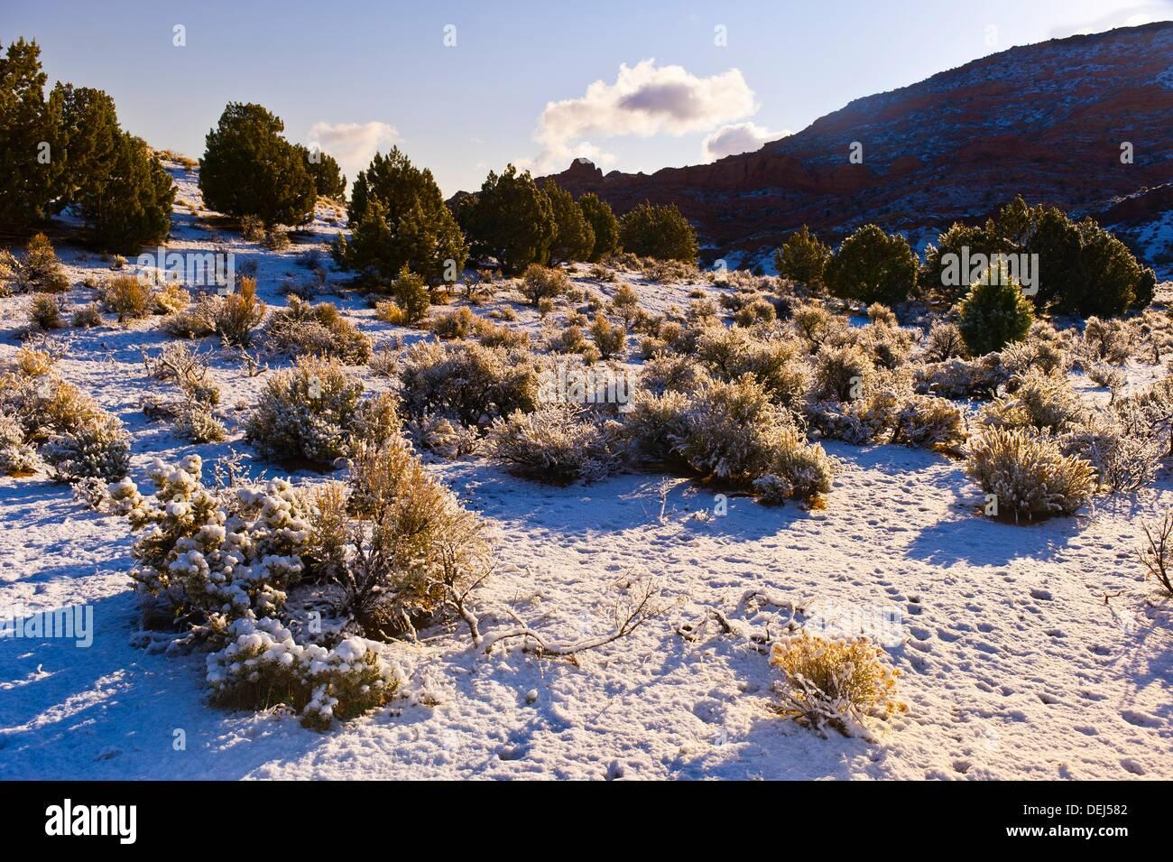 Stateline Campground, Vermillion Cliffs National Monument, Utah USA Stock Photo