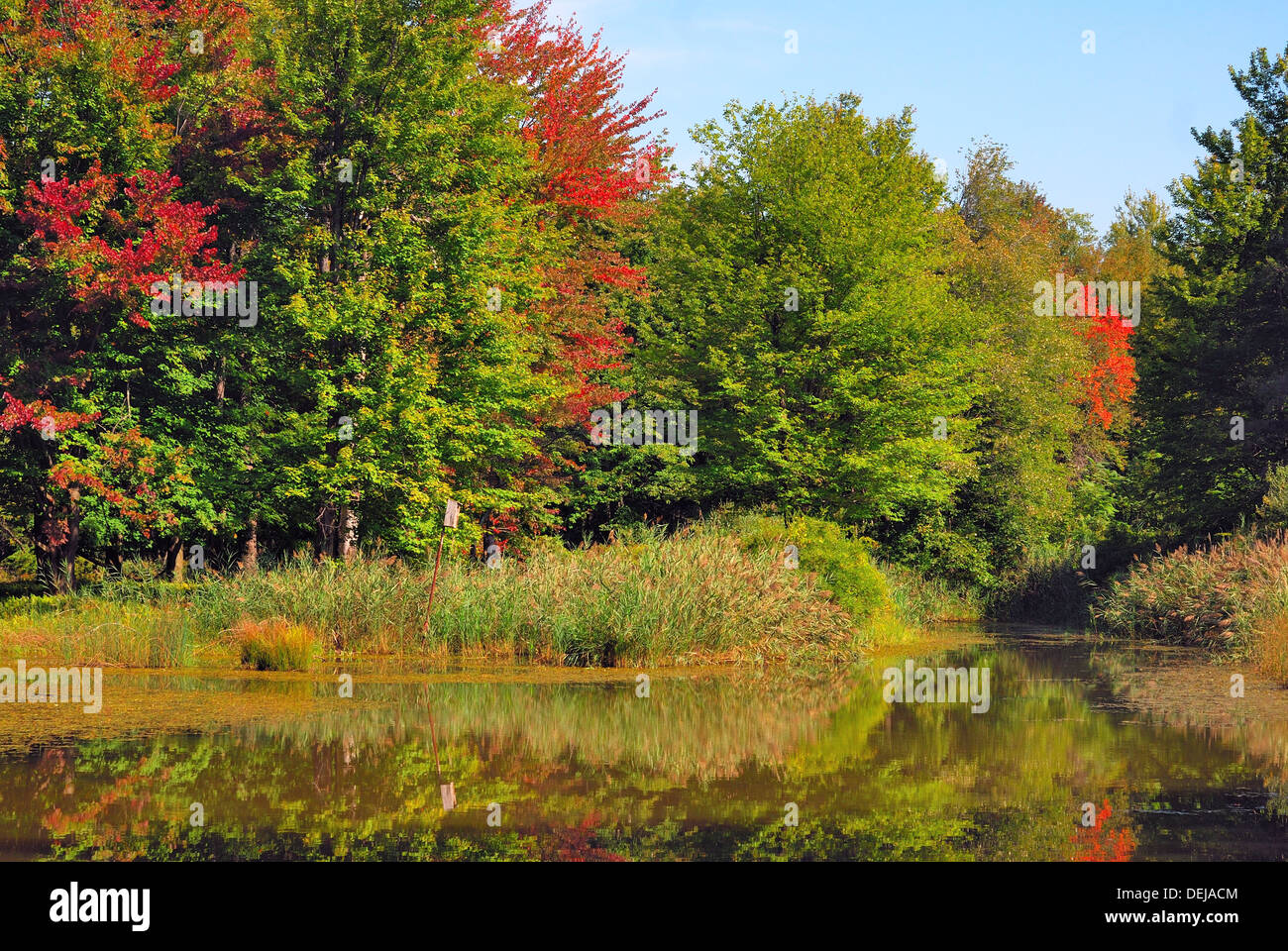 A green Swamp Landscape in the late summer season. - Stock Image