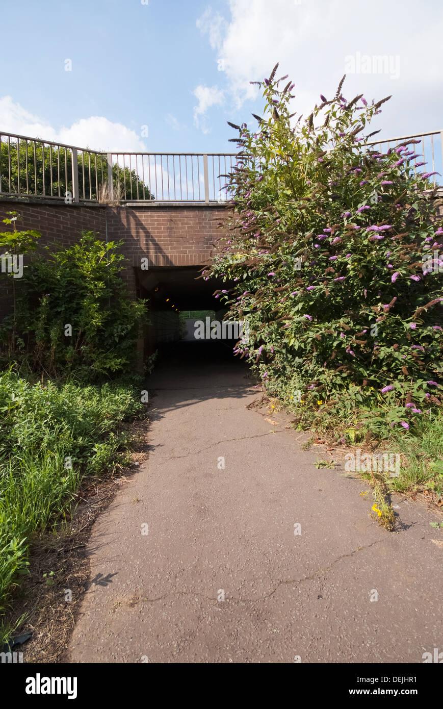 Overgrown Underpass - Stock Image