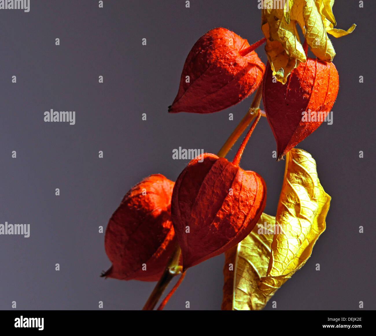 Dry flowers, decoration - Stock Image