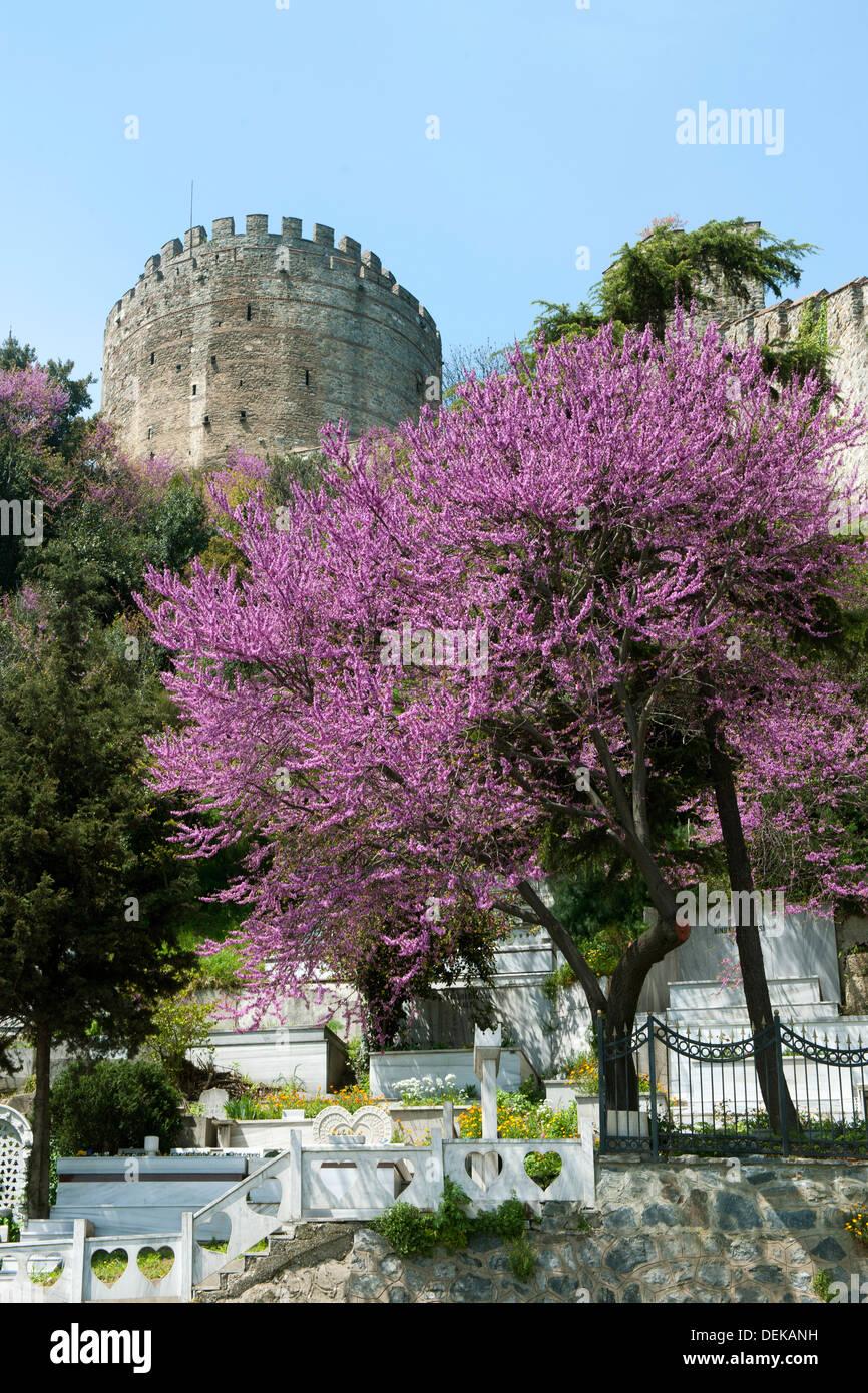 Istanbul, Sariyer, Rumelihisar, im Frühling blühen die Judasbäume Stock Photo