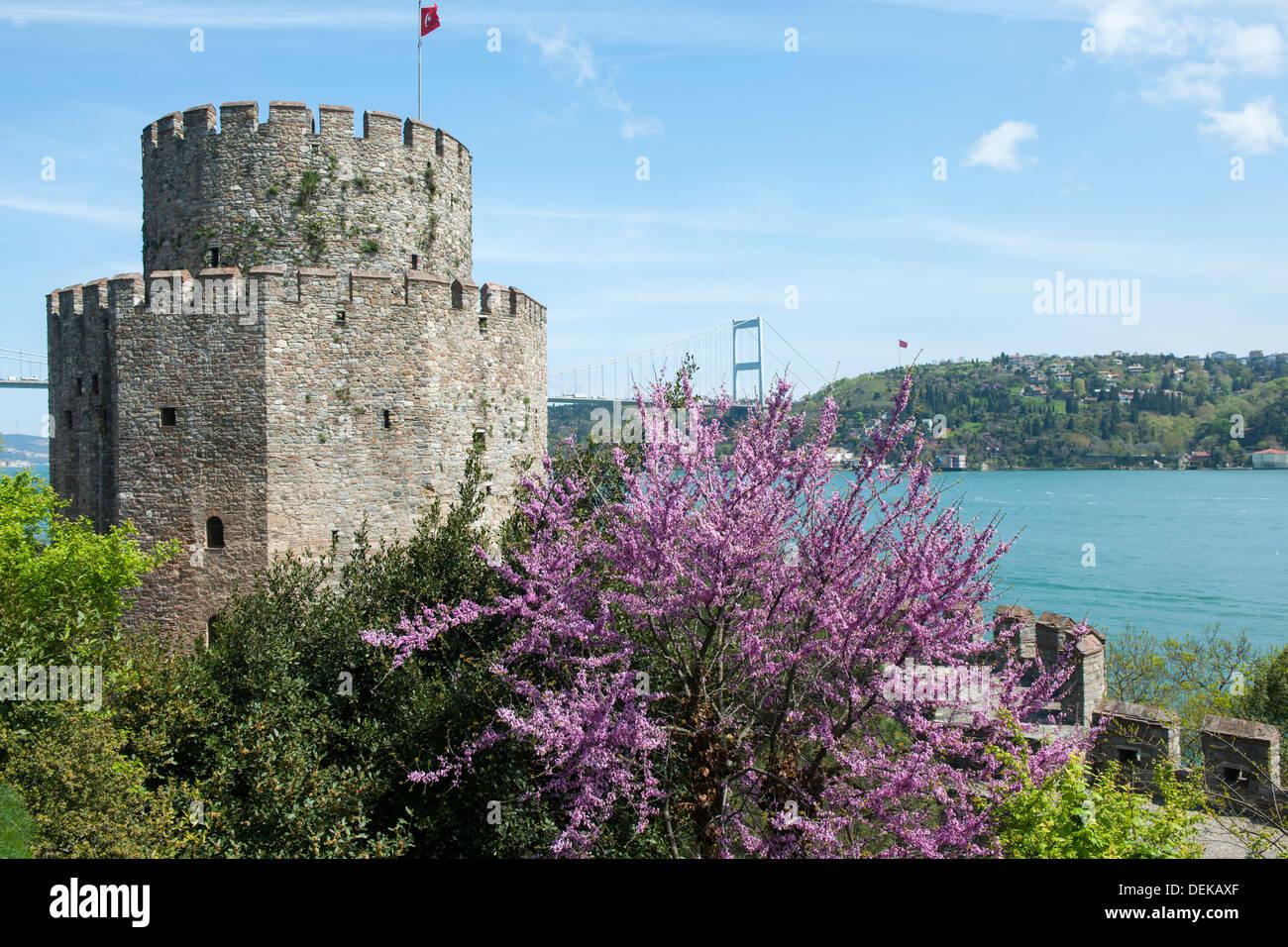 Istanbul, Sariyer, Rumelihisar, im Frühling blühen die Judasbäume - Stock Image