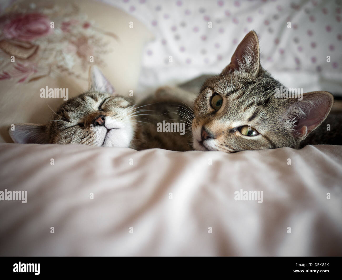 Two kittens sleeping together - Stock Image