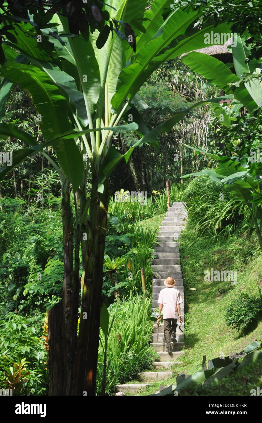 near Ubud (Bali, Indonesia): the Ubud Hanging Gardens Hotel´s garden - Stock Image