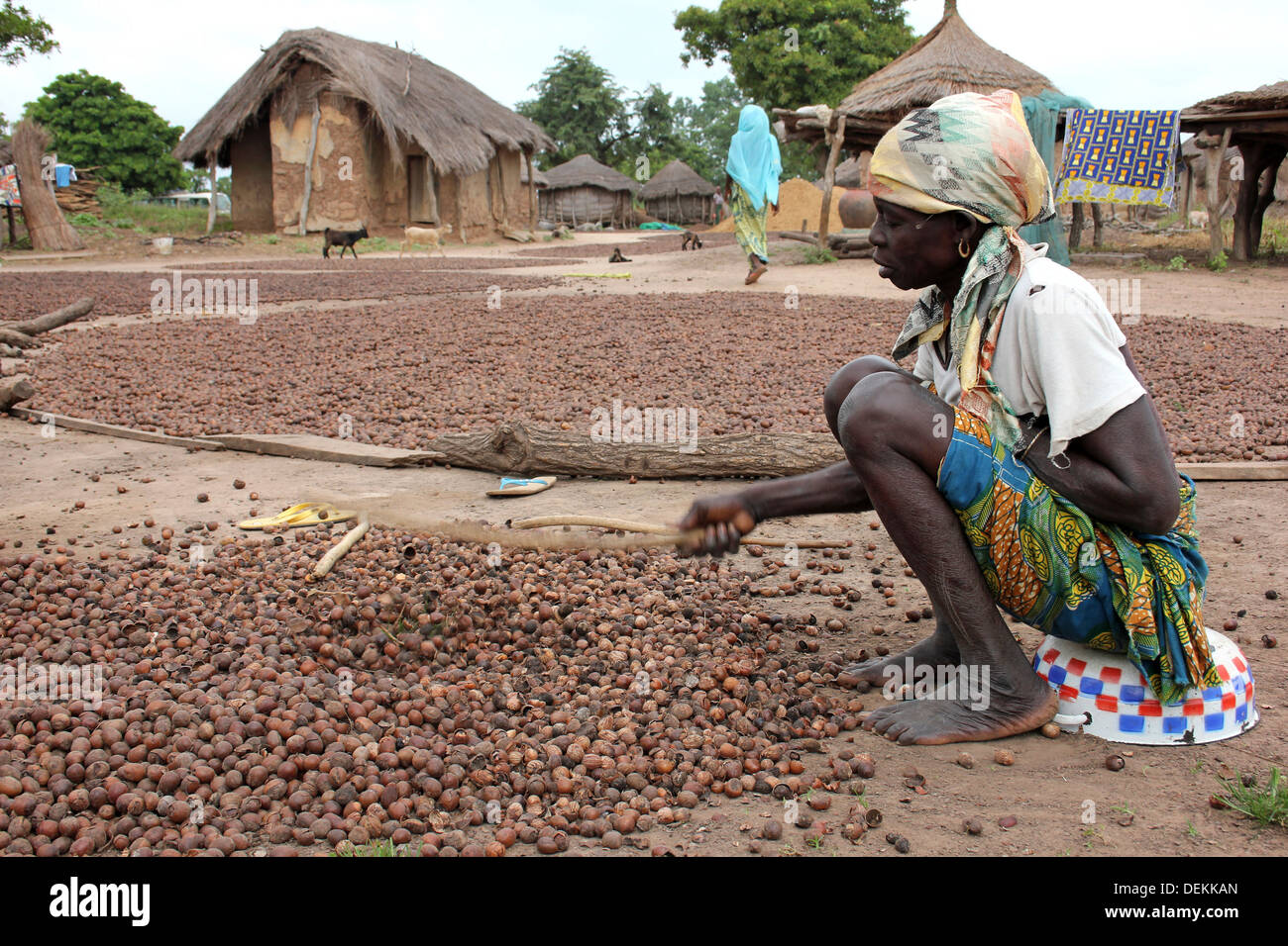Gonja Ethnic Woman In Ghanaian Village Beating Shea Nuts To Crack The Outer Shell - Stock Image