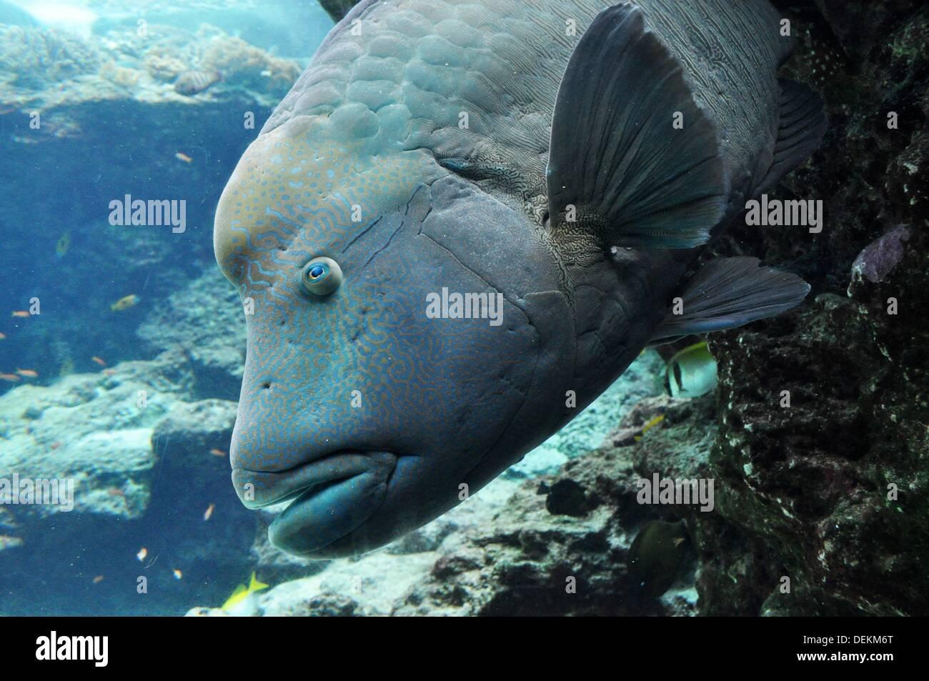 Okinawa Japan Tropical Fish At Okinawa Churaumi Aquarium Stock