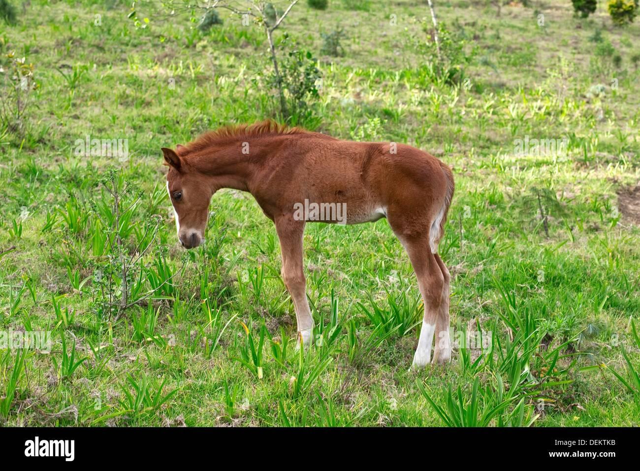 Newborn Colt 2 Months Old Stock Photo Alamy