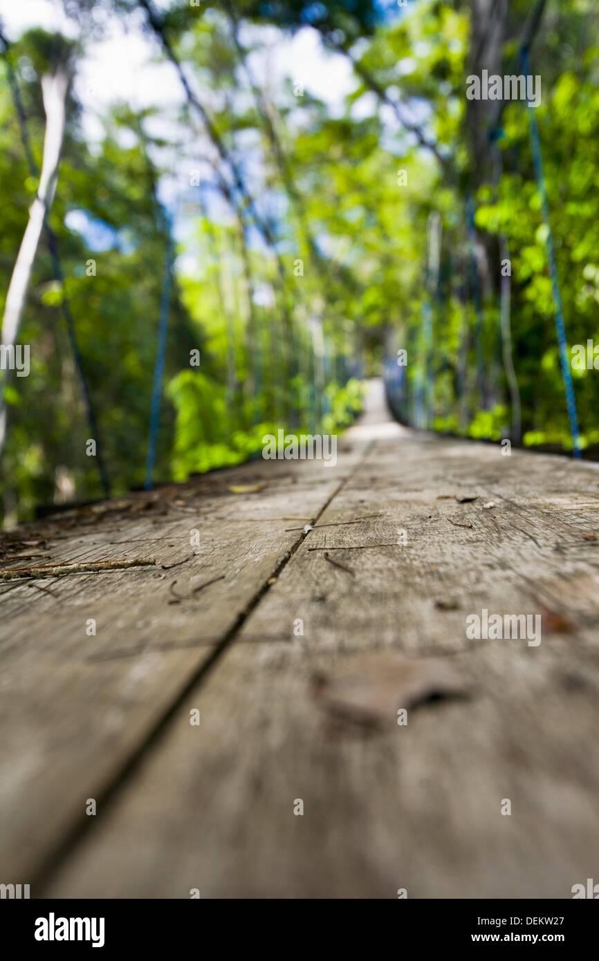 Guatemala, Rio Dulce, wooden suspension path through the jungle - Stock Image