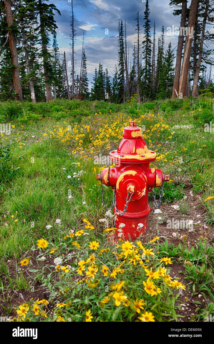 Red fire hydrant in forest Stock Photo