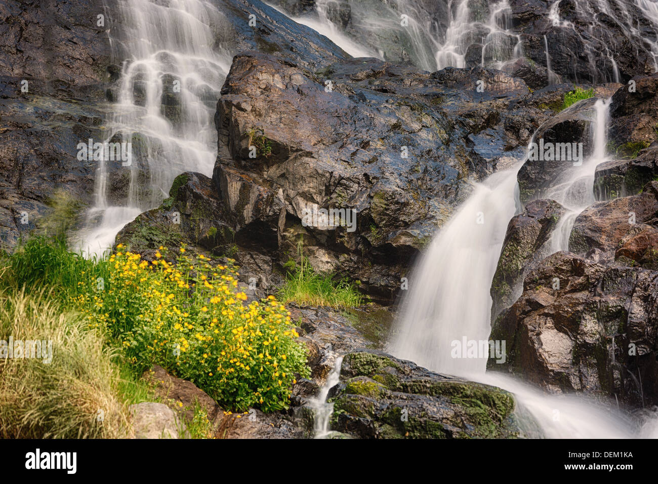 Todtnauer Waterfalls with yellow flowers, Black Forest, Germany - Stock Image