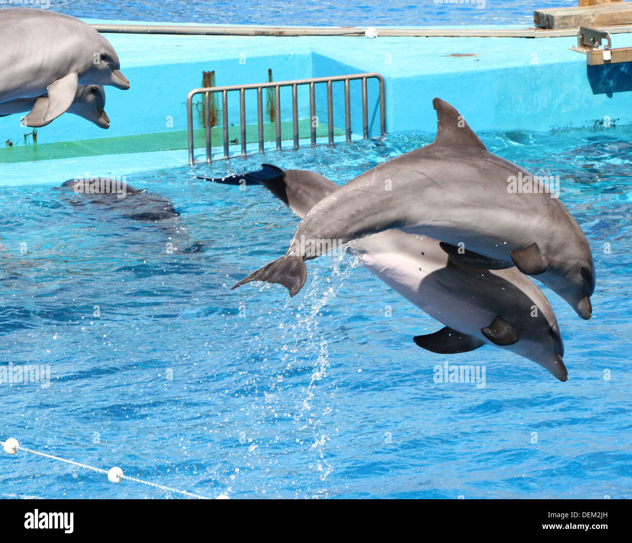 Bottle-nose dolphins jumping out of the water at the Oceanografic Aquarium Marine Park & Zoo in Valencia, Spain Stock Photo
