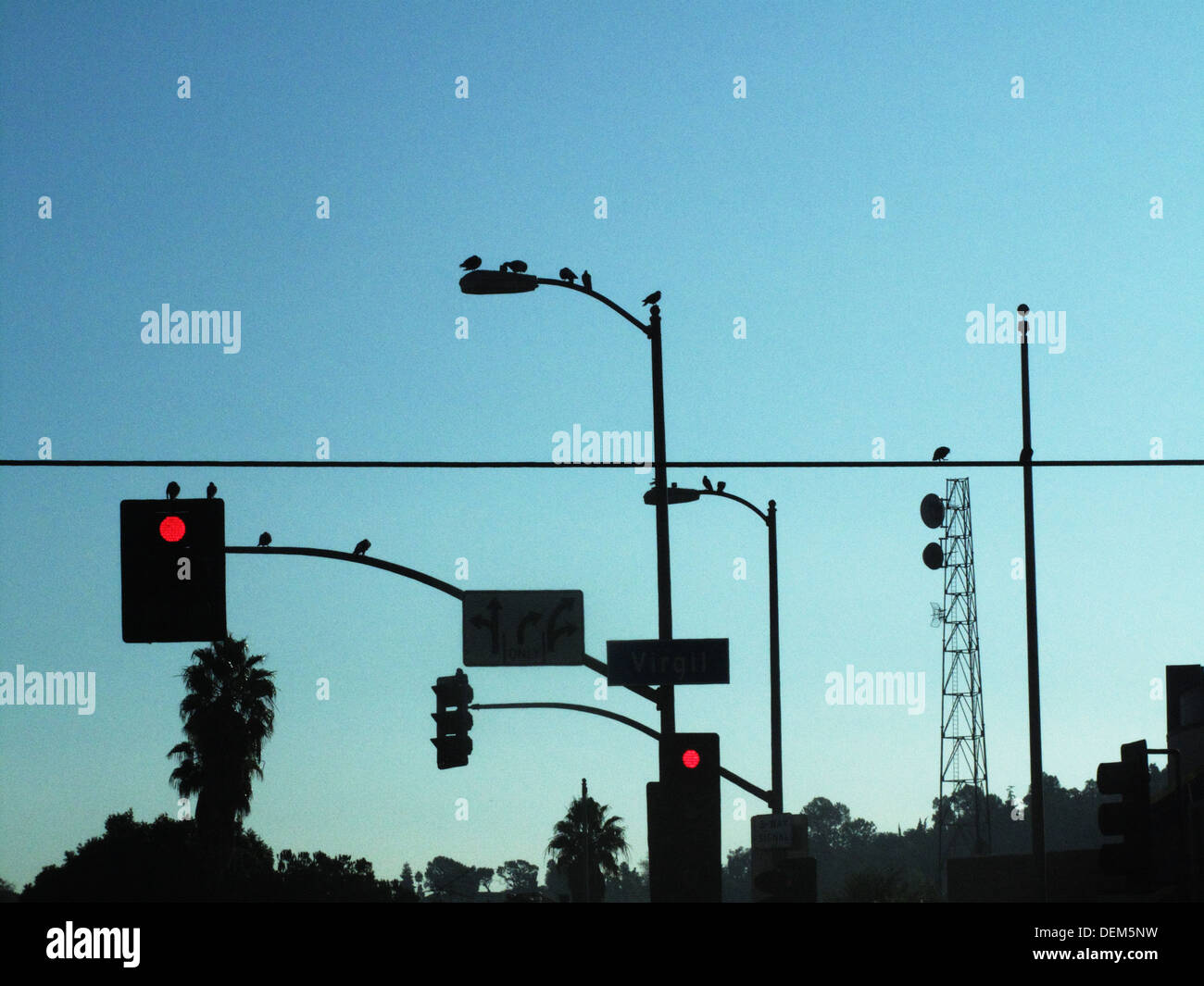 Red Traffic Lights and Street Lights with Perched Birds Silhouette Against Blue Sky Los Angeles California USA & Red Traffic Lights and Street Lights with Perched Birds Silhouette ...