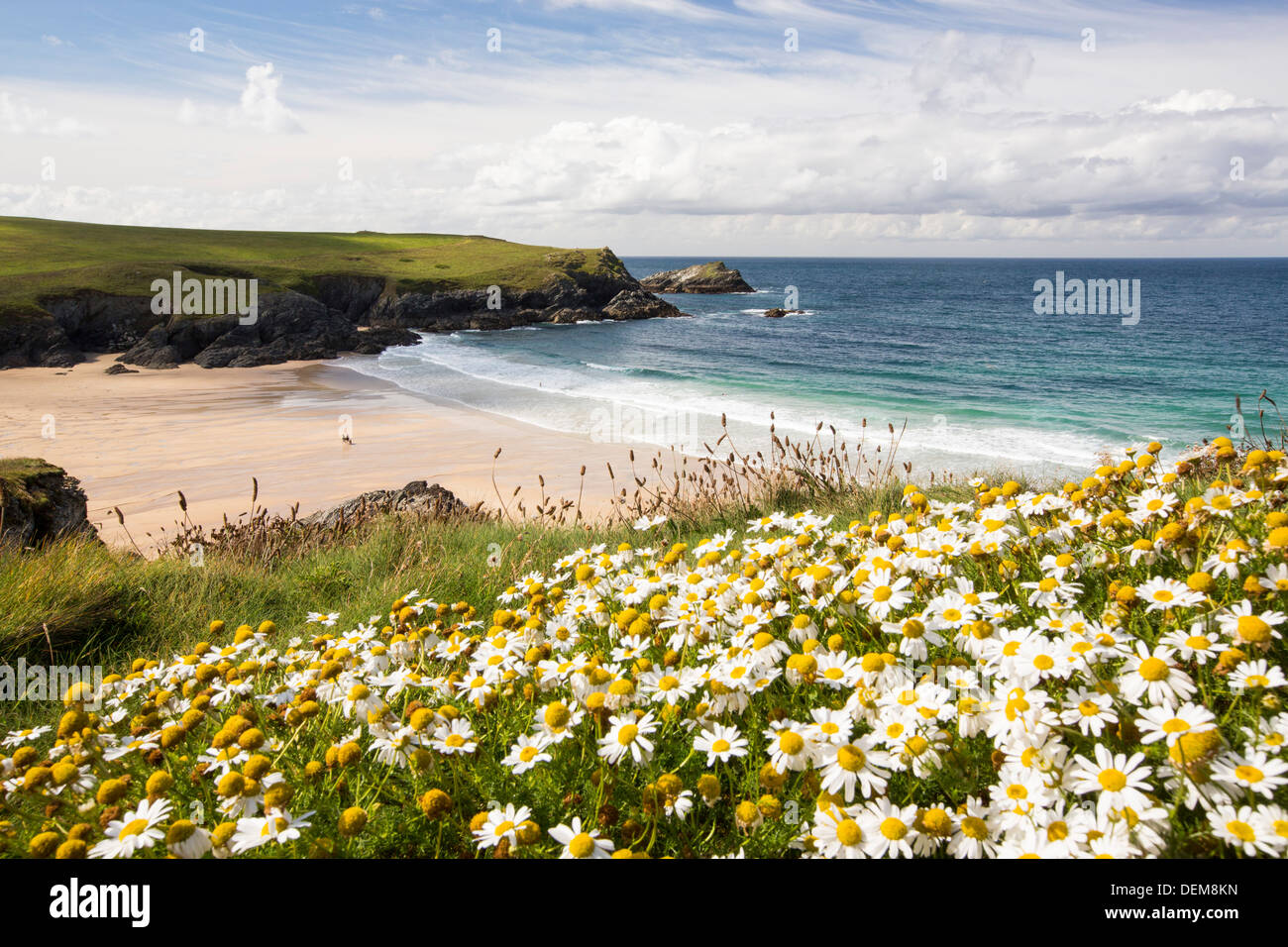 Wildflowers above Porth Joke on Pentire Point, near Newquay, Cornwall, UK. - Stock Image