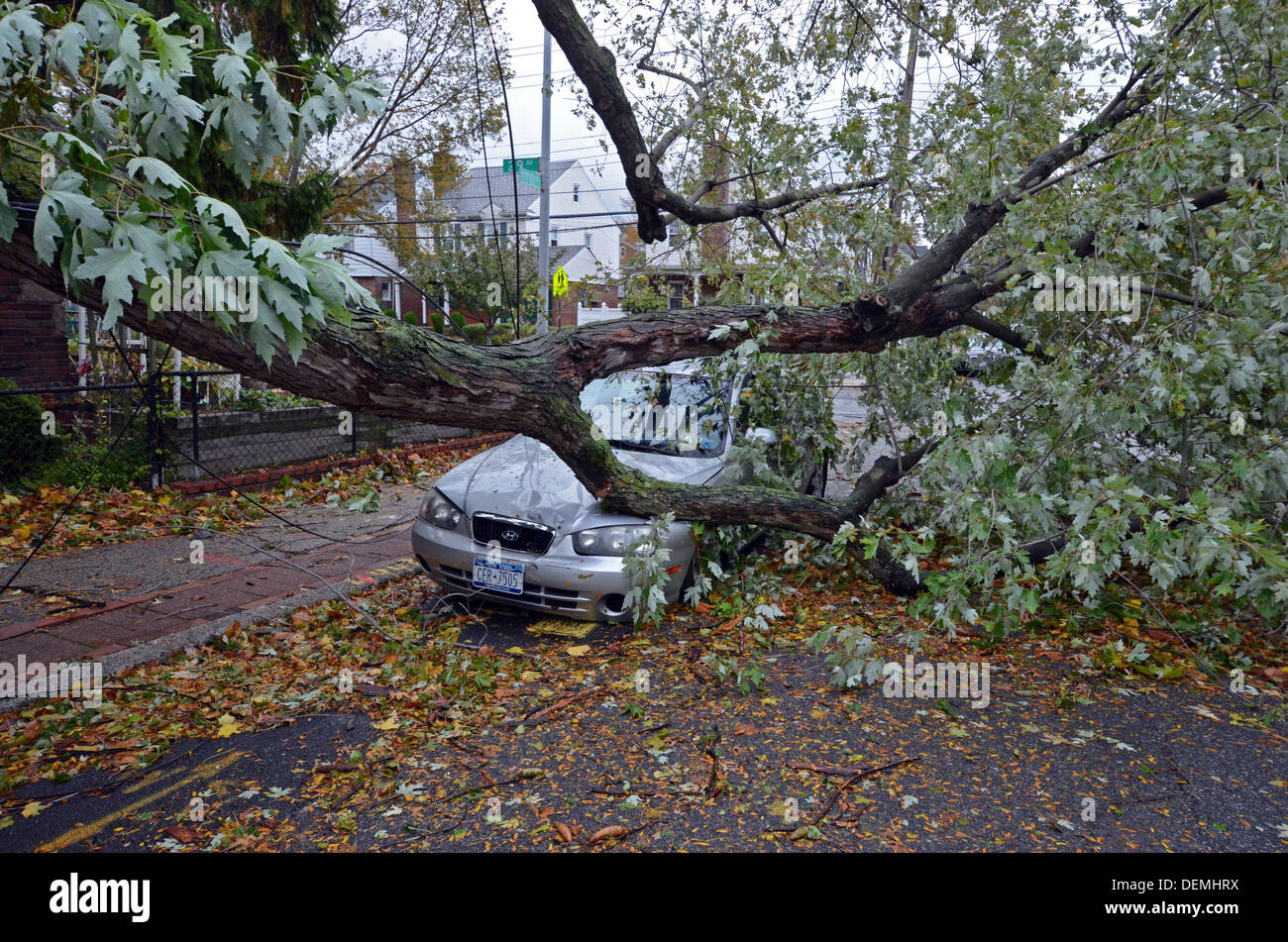 A tree that fell on a car and crushed it during Hurricane Sandy. In Flushing, Queens, New York - Stock Image