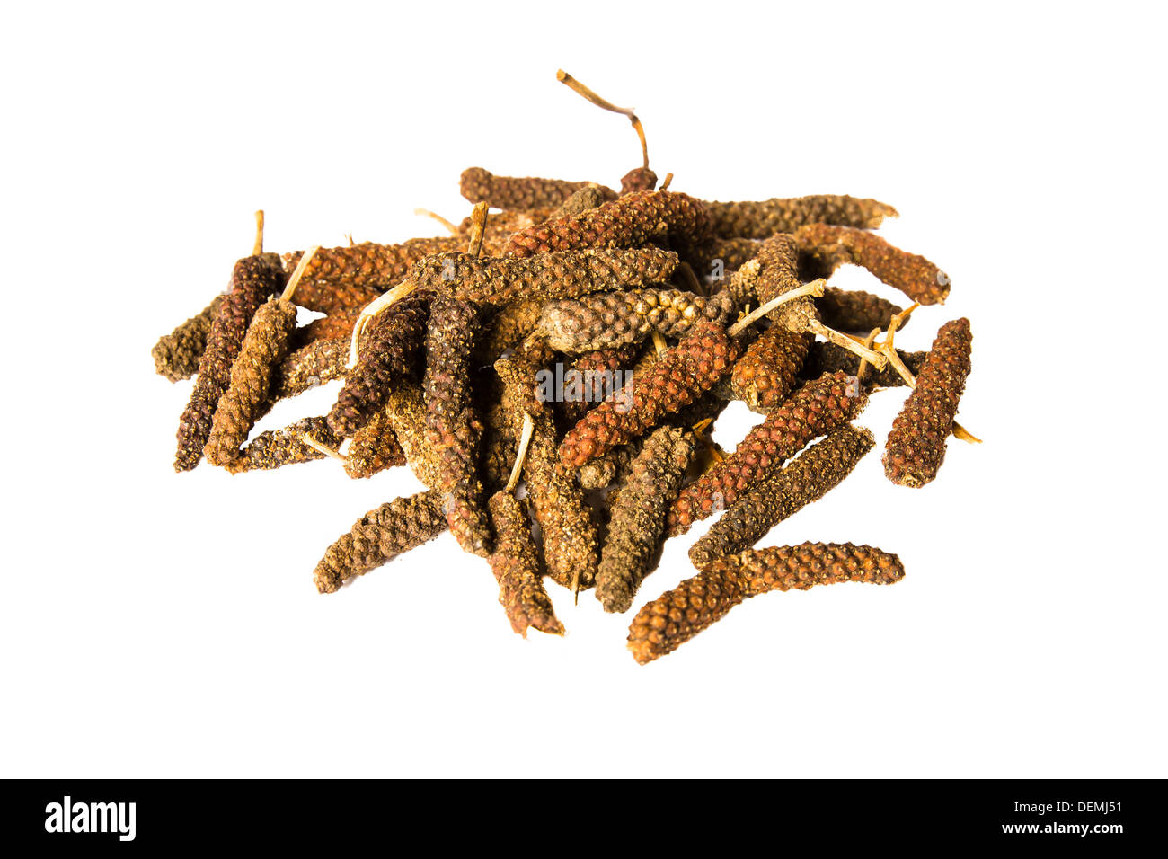 Long pepper commonly used in asian and indian cuisine. - Stock Image
