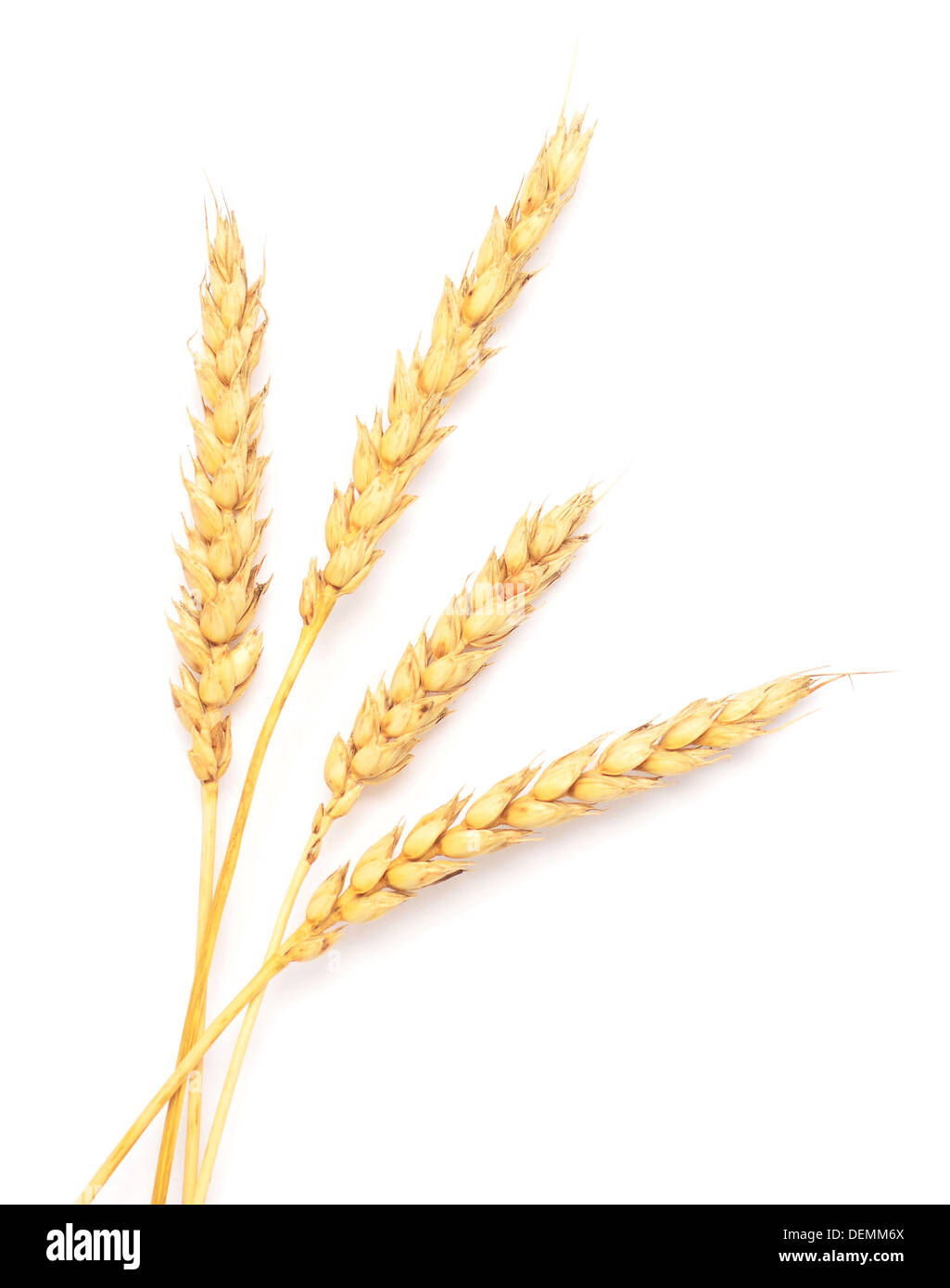 wheat ears - Stock Image