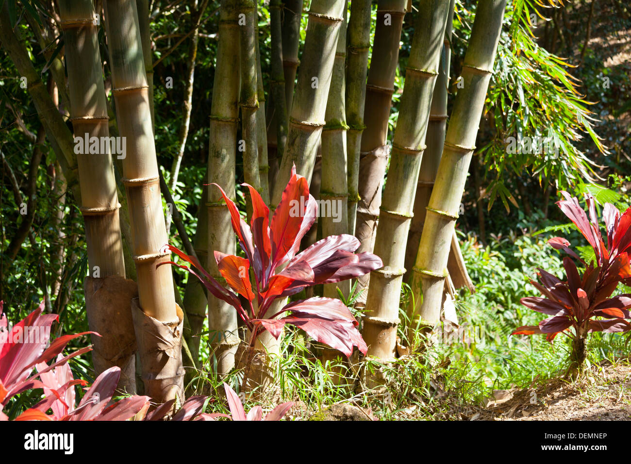 Tropical garden landscape in Maui, Hawaii with bamboo in the Stock ...