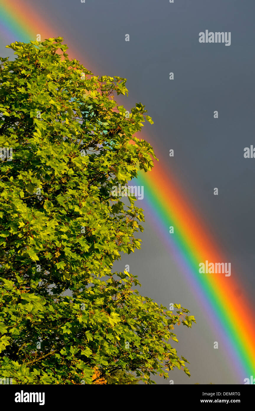 Rainbow over trees Stock Photo