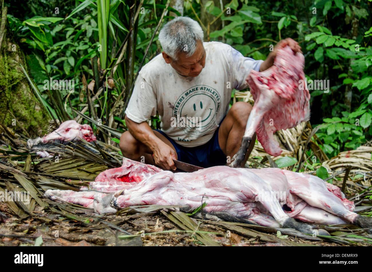 Sustainable bushmeat hunting amazonia peru - Stock Image