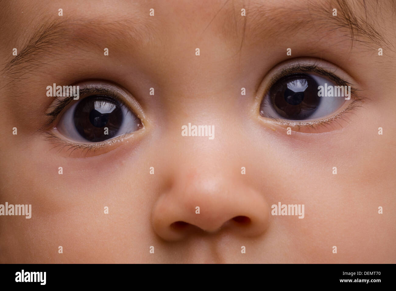 Baby brown eyes and nose - Stock Image