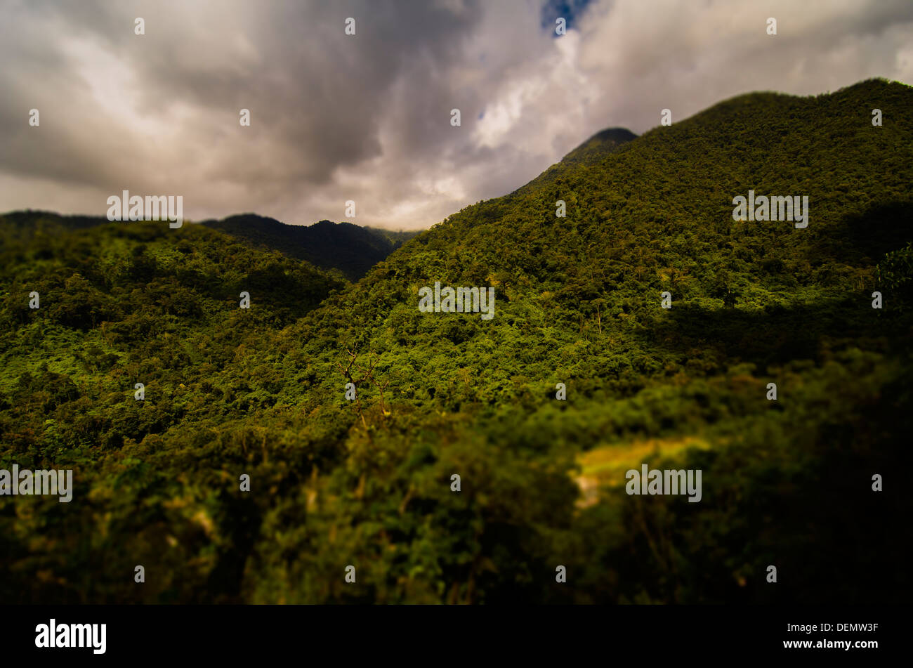 Cloud Forest, Manu National Park, Madre de Dios - Stock Image