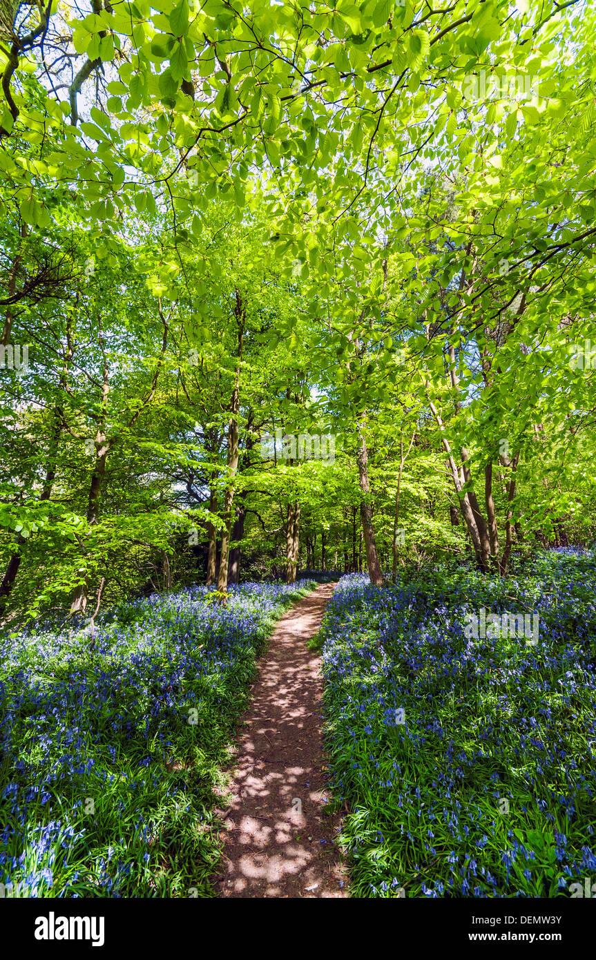 mariners hill, Westerham, Kent, England, UK, Europe - Stock Image
