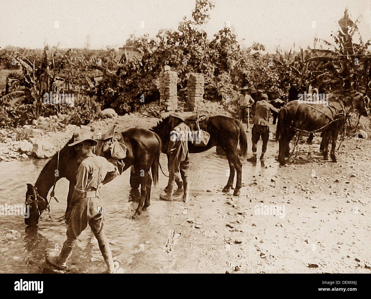 Australian troops watering their horses during WW1 - Stock Image